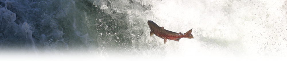 State of Salmon Report